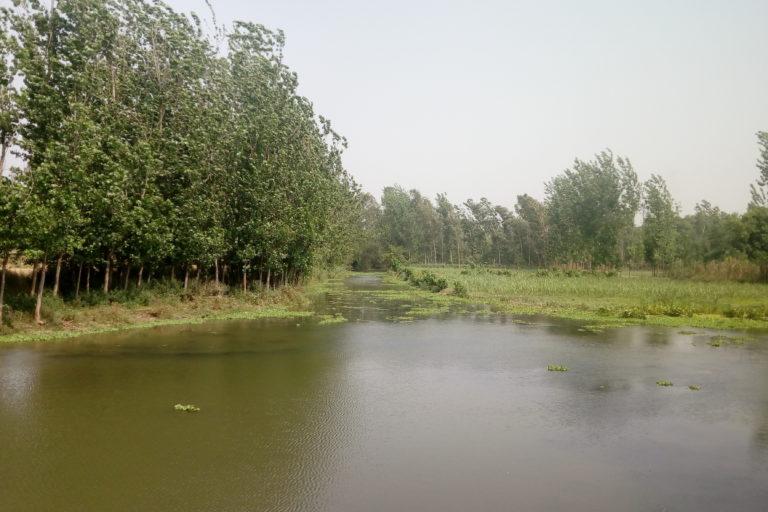 करुला नदी की हालत काफी खराब हो गई थी और गर्मी के दिनों में इसमें बहाव बिल्कुल नहीं रहता था। तस्वीर- डब्लूडब्लूएफ-इंडिया