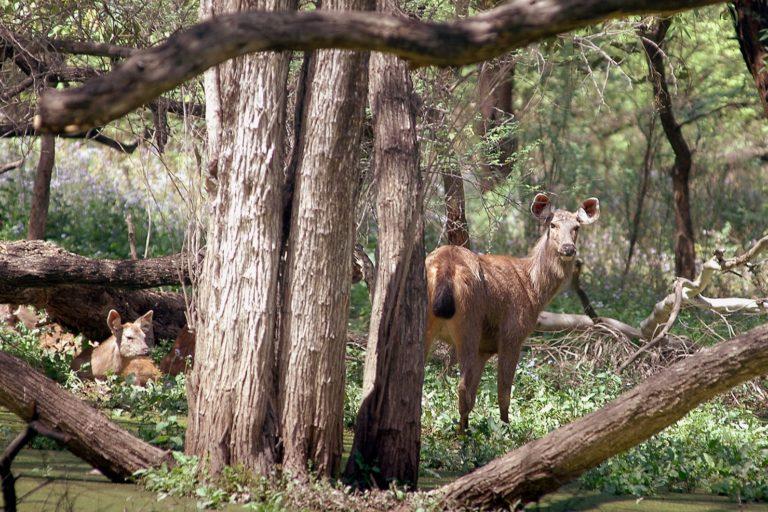 सुखमा वन्यजीव अभयारण्य कई दुर्लभ वनस्पतियों और जीवों की वजह से आकर्षण का केंद्र है। तस्वीर- विशेष प्रबंध