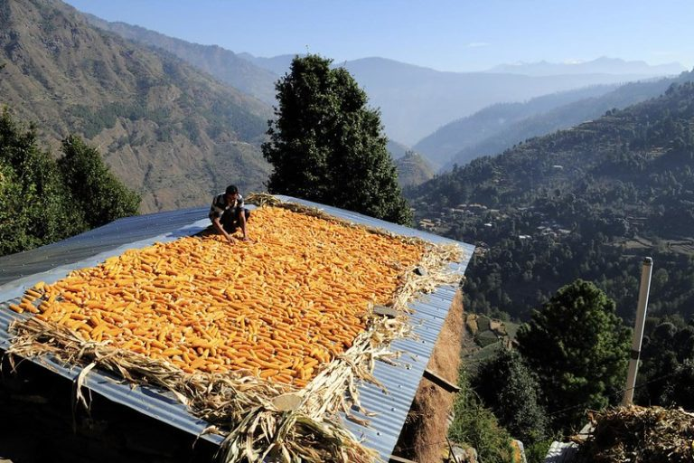 हिमाचल प्रदेश में जलवायु परिवर्तन का असर है जिससे बारिश की तीव्रता बढ़ी हैं और सेब की खेती भी प्रभावित हुई है। तस्वीर-नील पामर/सीआईएटी/फ्लिकर