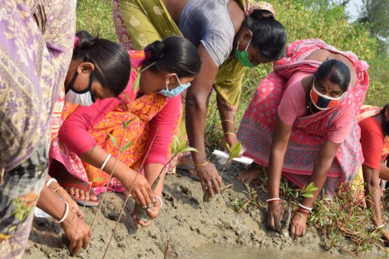 सांति दास (हरी साड़ी में) ने अपना पति बाघ के हमले में खो दिया। वे अन्य महिलाओं के साथ मिलकर मैंग्रोव के पौधे लगा रही हैं। तस्वीर- झरखाली साबुज बाहिनी