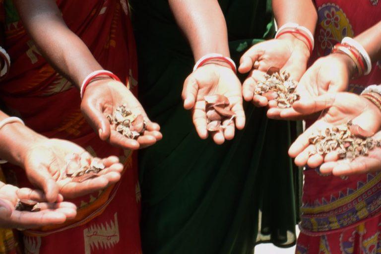 मैंग्रोव के बीज। झरखाली साबुज बाहिनी से जुड़ी महिलाएं इलाके में मैंग्रोव का जंगल लगाती हुईं। तस्वीर- पार्थो बर्मन
