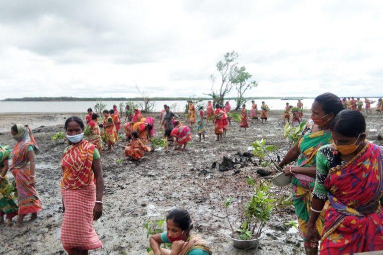 मतला नदी के किनारे मैंग्रोव लगाने का काम चल रहा है। तस्वीर- झरखाली साबुज बाहिनी