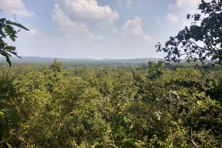 हसदेव अरण्य का जंगल। यह प्राचीन जंगल पर्यावरण के लिहाज से बेहद संवेदनशील है। तस्वीर- मयंक अग्रवाल/मोंगाबे