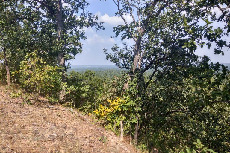 हसदेव वन एक वक्त में नो गो क्षेत्र था, यानी यहां कोई गैर वन संबंधी गतिविधि नहीं हो सकती थी। खनन से यहां का सूक्ष्म जलवायु प्रभावित होगा। नतीजतन घुसपैठिए प्रजाति के वनस्पति जंगल में प्रवेश करेंगे। तस्वीर- मयंक अग्रवाल/मोंगाबे