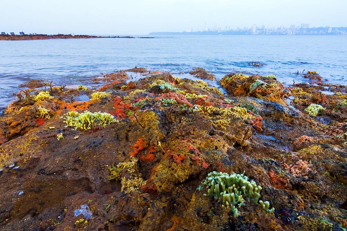 समुद्री स्पंज (Porifera sp.) तस्वीर- सारंग नायक