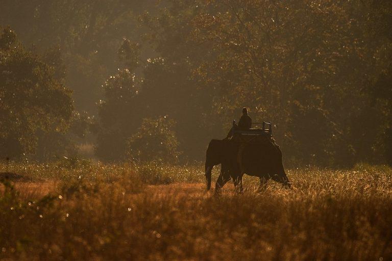 बाघ की तलाश में हाथी के साथ महावत। बाघ वाले जंगल में गश्ती के लिए हाथी बेहद जरूरी है। तस्वीर- कल्याण वर्मा/विकिमीडिया कॉमन्स