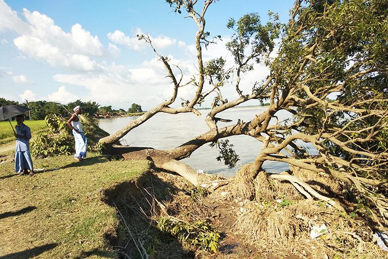 नेपाल से निकलने वाली मेची नदी में कटाव के कारण किशनगंज में गिरा पेड़। मानसून के सीजन में ये नदी हर साल सैंकड़ों एकड़ जमीन निगल जाती है। फ़ोटो: उमेश कुमार राय