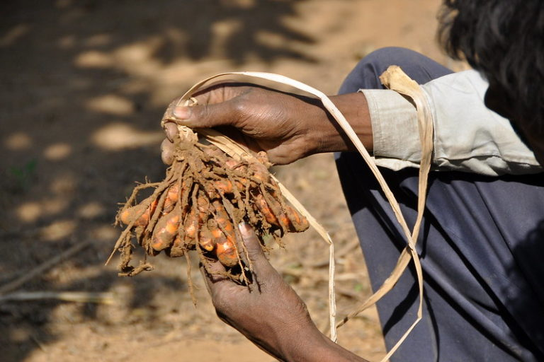 बिहार में वनाधिकार कानून के प्रति लोगों में जागरुकता की कमी को भी इसके खराब क्रियान्वयन की वजह माना जा रहा है। तस्वीर- पी कैसियर/सीजीआईएआर/फ्लिकर